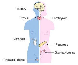 Paediatric Endocrinology